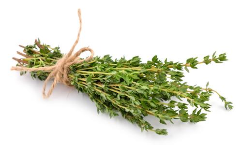 plante thym