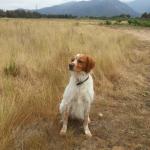senephytol chien