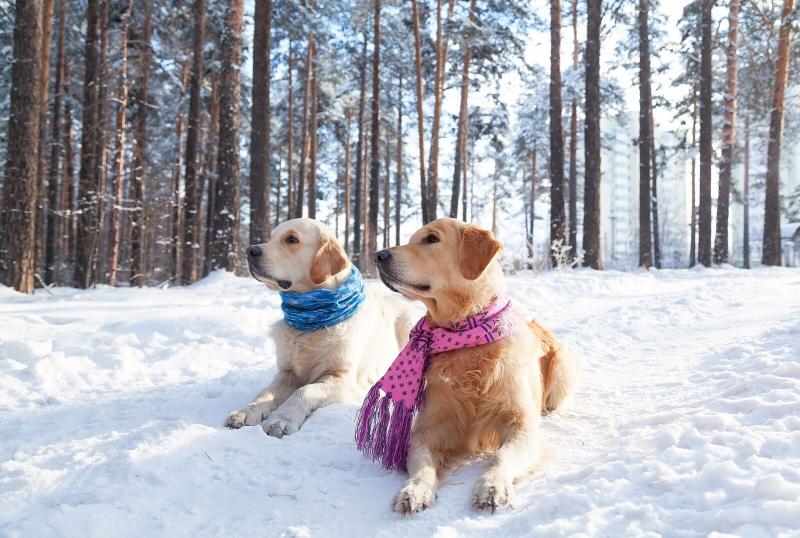 Protection animal hiver